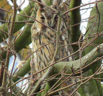 Eagle owl in the garden, Rastatt Favorite Palace. Image: Staatliche Schlösser und Gärten Baden-Württemberg, Kai von der Schmitt
